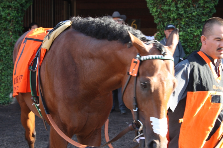 Rum Point gleams like polished mahogany in the Del Mar paddock Wednesday before the $300,000 Futurity.
